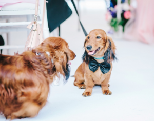 Wedding guests_pets